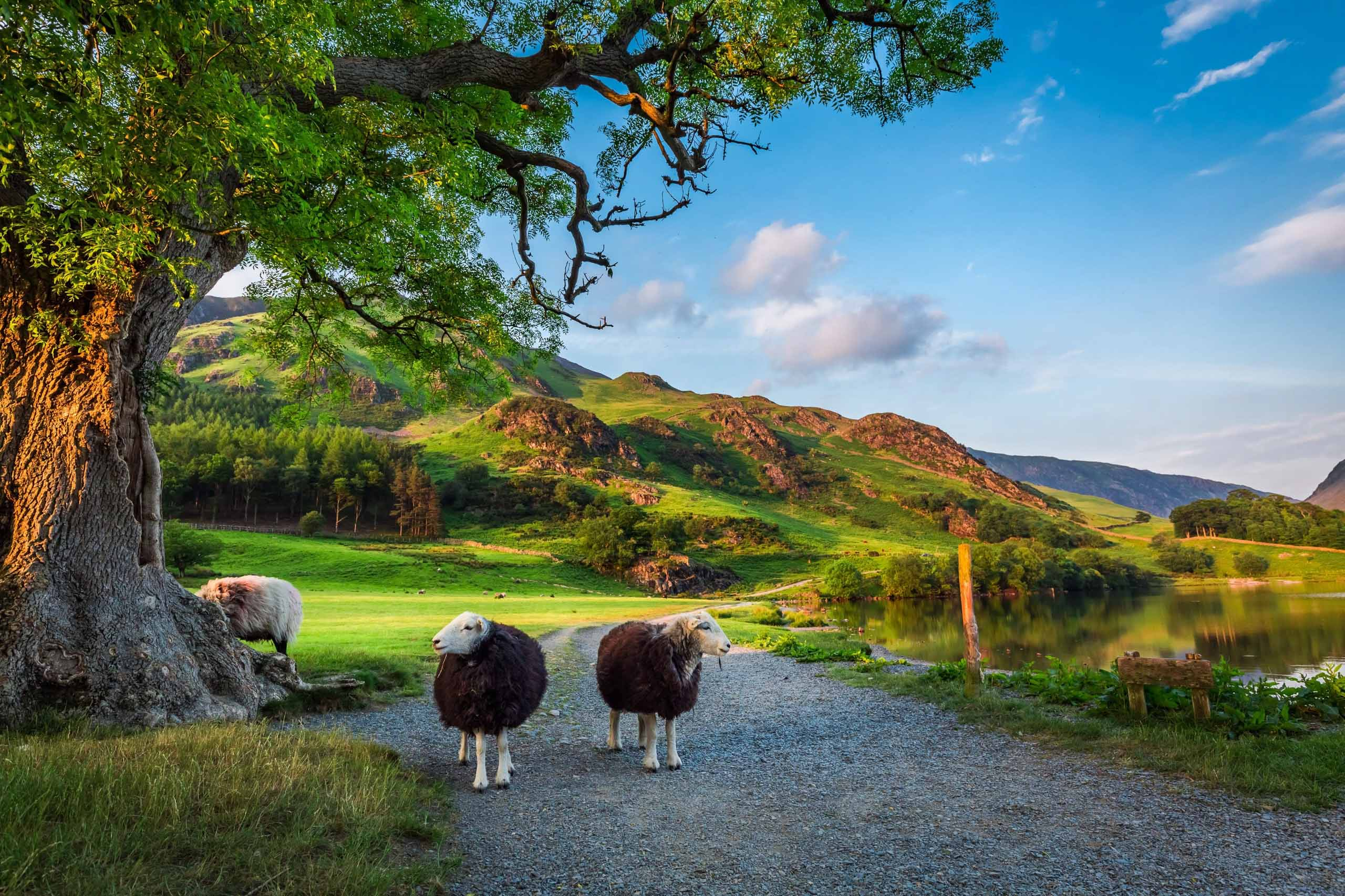 Two sheep in the Lake District, UK