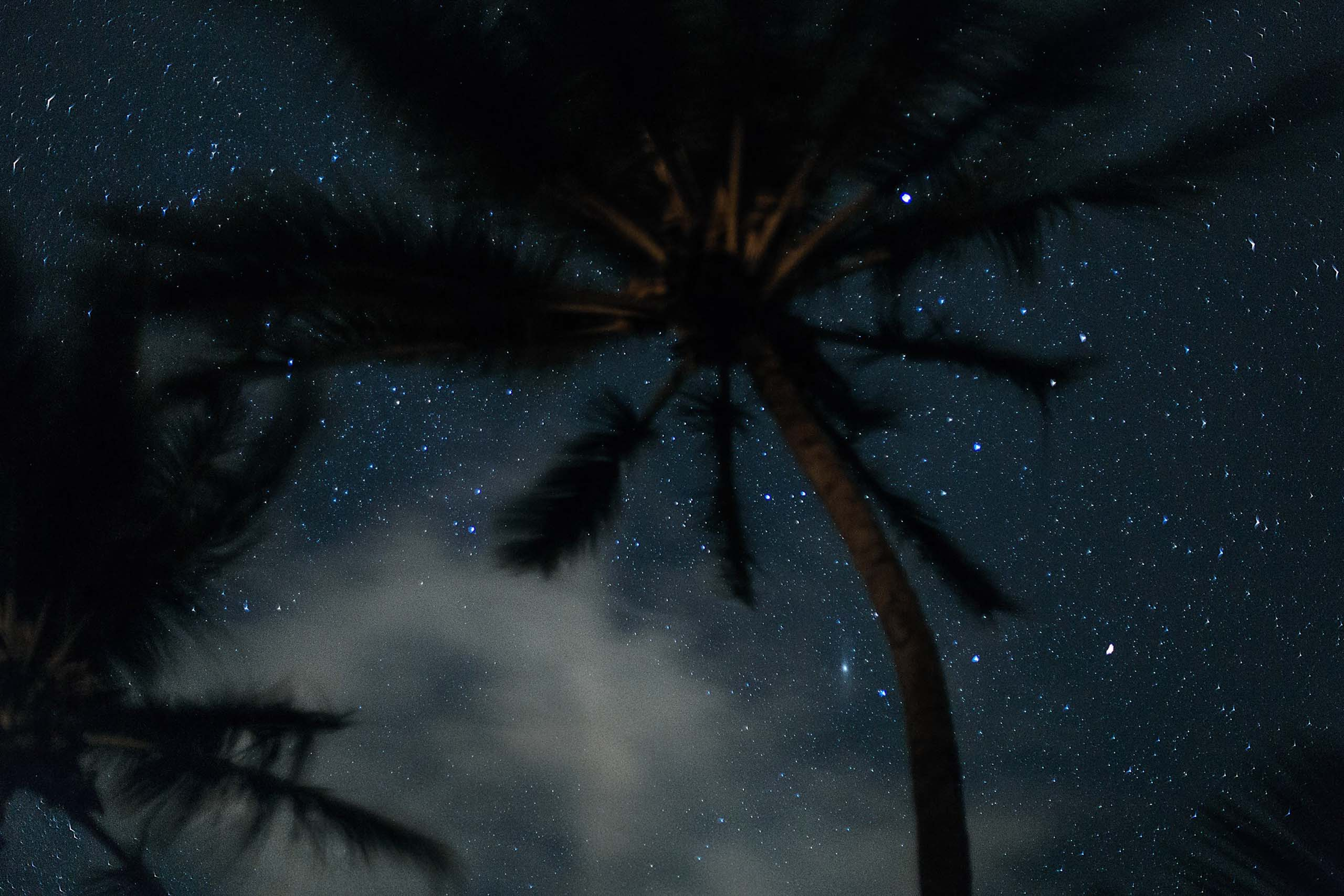 Tropical starry night with palm tree. Photo by Lia Bekyan on Unsplash