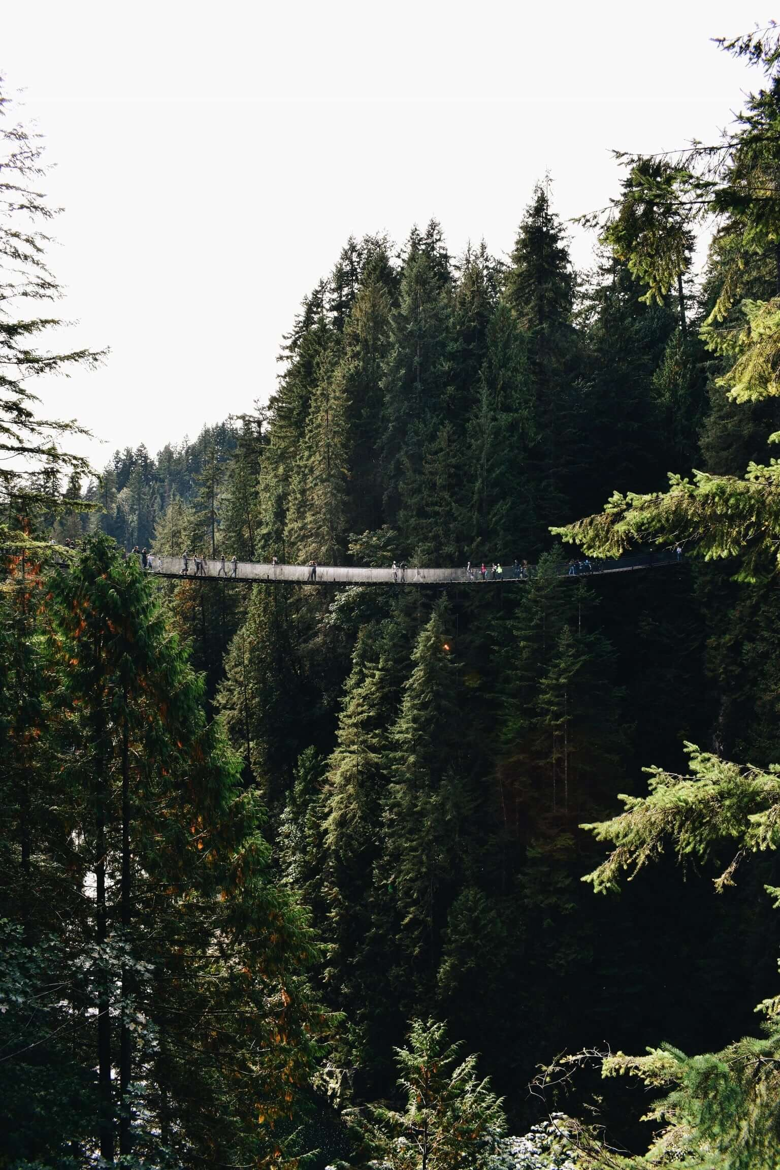 Capilano Suspension Bridge. Photo by EC on Unsplash