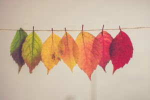 Coloured leaves on string. Photo by Chris Lawton on Unsplash