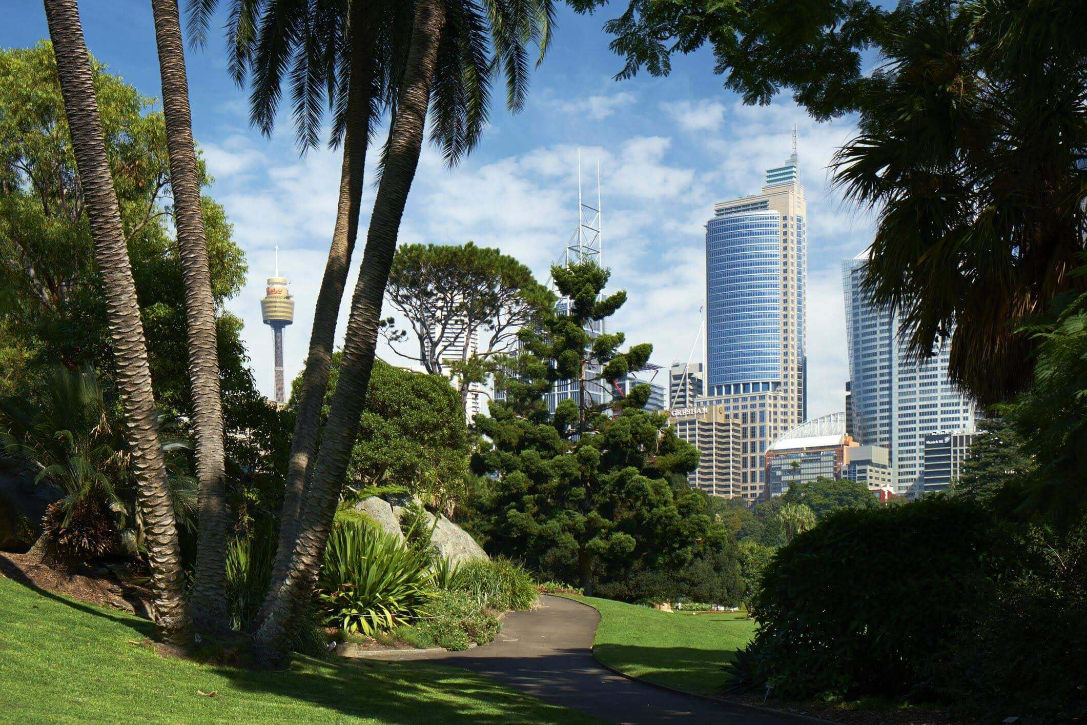View of the Sydney Botanic gardens with city buildings in background