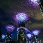 Gardens by the Bay lit up, Singapore. Photo by Miguel Sousa on Unsplash