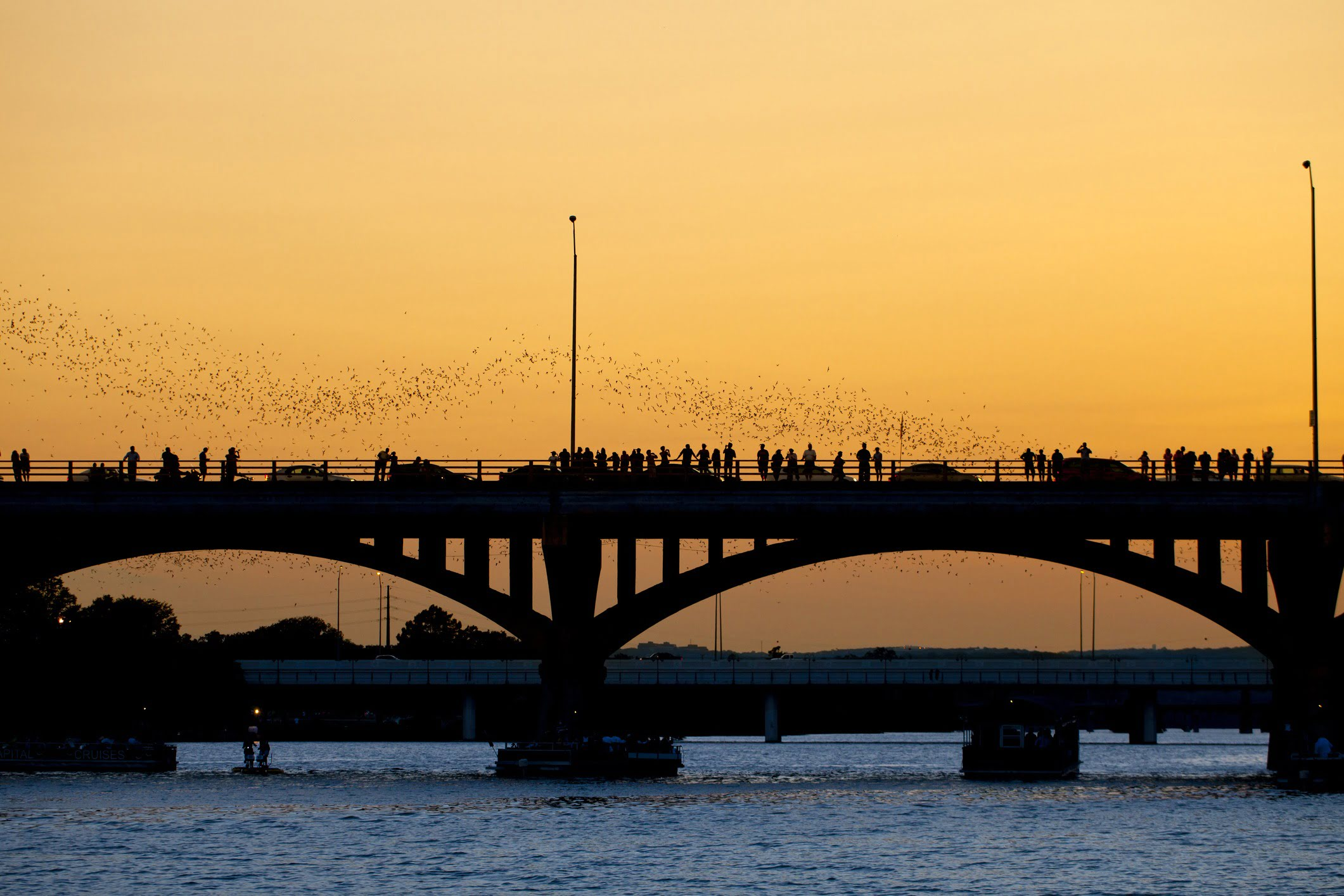 People watching bat leaving the Congress Ave bridge at sunset in Austin, Texas.